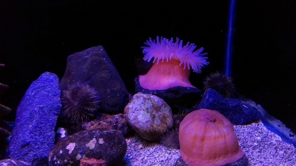 Enjoying the aquarium- Virginia Beach Vacation ideas