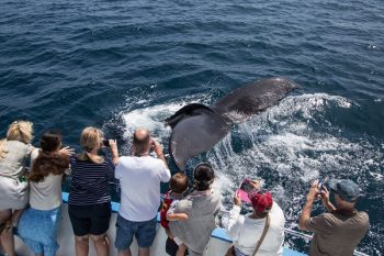 Newport Landing Whale Watching Coupon