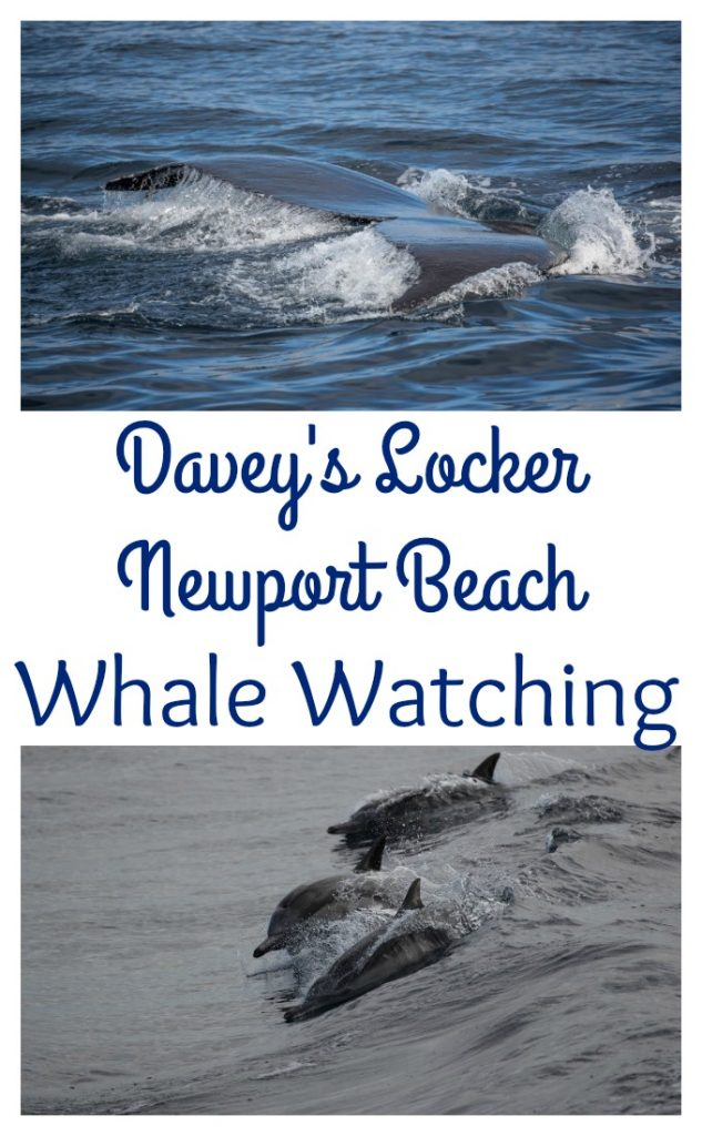 Looking for whale watching in California? See what we thought of Whale watching in California with Davey's Locker Newport Beach Whale Watching.