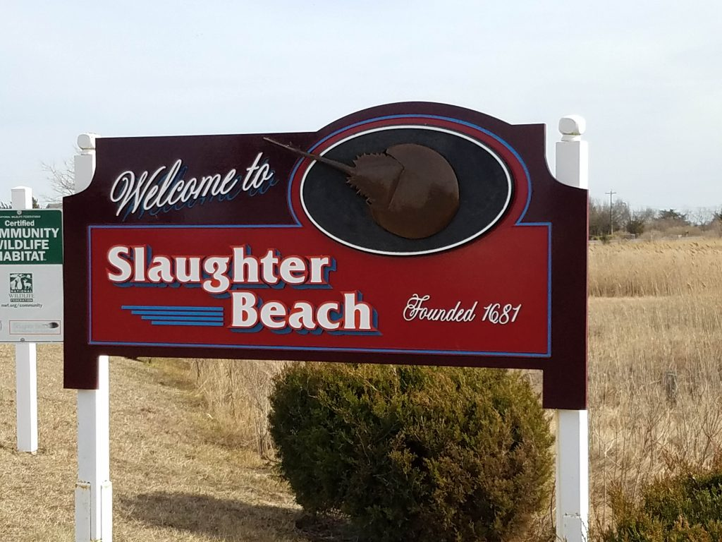 Slaughter Beach, in Delaware, is a quiet beach, that is known for the wildlife, including being a horseshoe crab sanctuary
